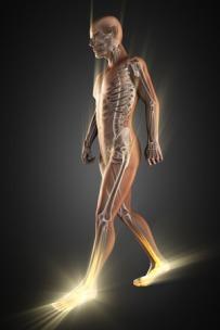 47279680 - human bones radiography scan image